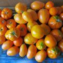 Oranžni paradižniki na kupu