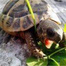 Moja Sofia lačna