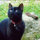 Moj pozer Miško
