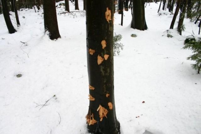 Murovica 3.1.2006 - foto