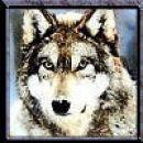 Wiii, volkci so tko lepi!!