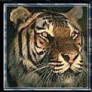 Tigrčk, k se glih za kšno zebro uzira... ;)
