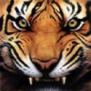En tigr, vrjetn bl psiho, kj tko napadaln!!