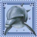 Pa spet delfinčk, sj taj tut kr ql..