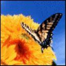 Butterfly!! Mal teluvadbe ane-->krila razmigava..