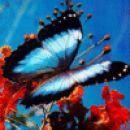 Še en butterfly-ček ;P