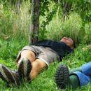 Utrujeni Sajmon je padel pod trto