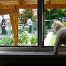 Moram po babje čez okno zijat!!!! Lahko bi kaj zamudila, to pa gre :-))