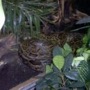 SARKA (zmija)