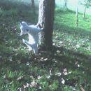 Jaz bi pa plezal po tem drevesu! A mi pomagaš prosim?
