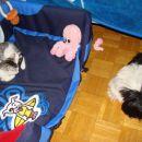 Sparky & Lina pri počitku