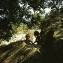 malinovke
