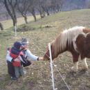 kmečki turizem čisto blizu nas in mali islandski konjički