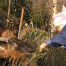 Kajči je nora na sosedove koze: Rezi in Rozi:) Na tej ograji preživimo veliko časa:)