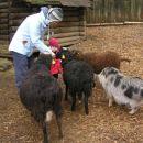 raje ne dajajte bobi palčk ovčkam, ker jih imajo extra pretiramo rade:)
