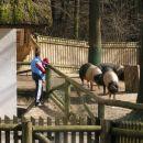 živalski vrt Ljubljana in Kajči je bila najbolj navdušena nad pujsi