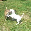 Lola and Ori