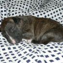 bono sleeping