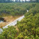 potka do jezera obdano z nizkimi borovci