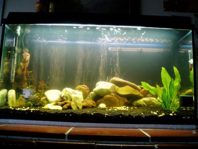 Akvarij-malawi - foto