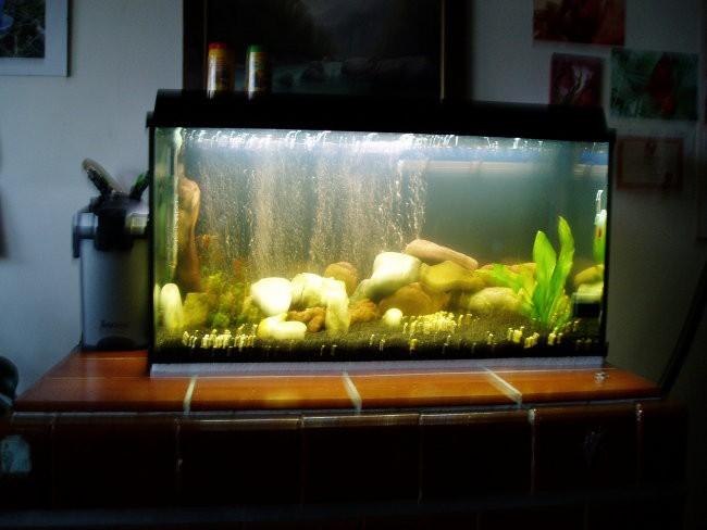 Akvarij-malawi - foto povečava