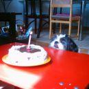 Ajšin prvi rojstni dan, 4.4.2005