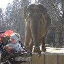 O ne, ta slon pa hoče moj smoki popapcat . . .