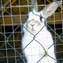 Zajček (ne moj)