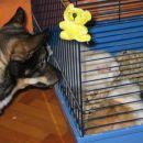 Miško pazi na svojo čredo :)