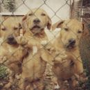Pupps