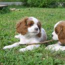 Roxie s sestrico Ruby
