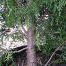 Drevesa iz drevesnice