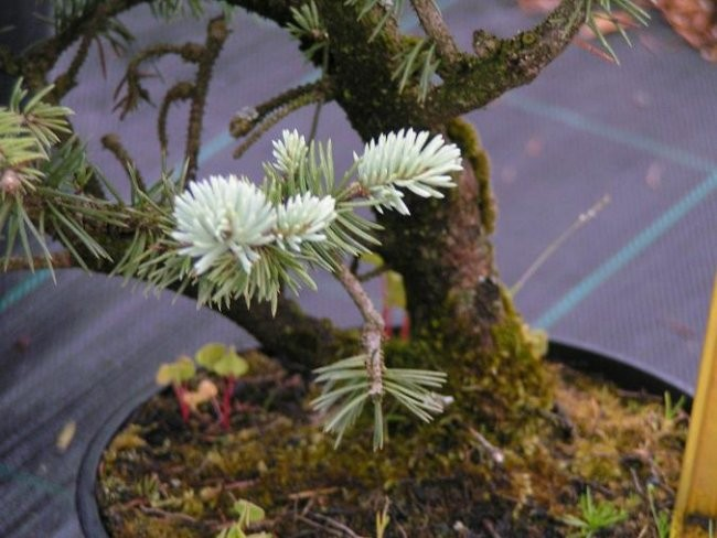 Drevesa iz drevesnice - foto povečava