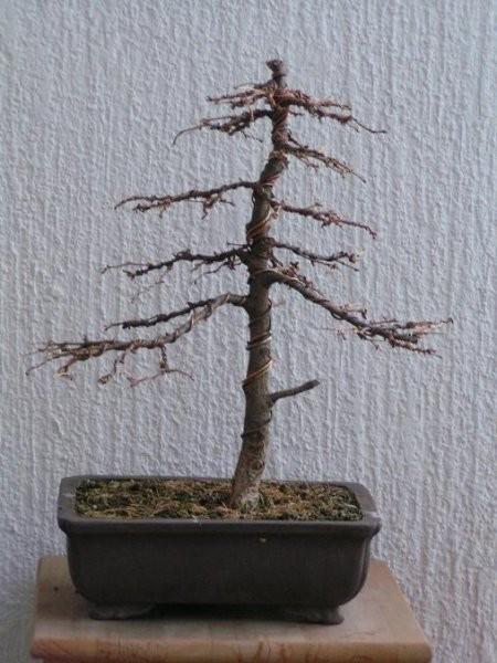 Drevesa iz drevesnice - foto