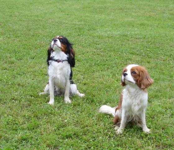 Popi & Annie; mb, junij 06 - foto