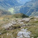 Ko sem se vračal z Tosca, sem srečal večjo skupino ovac.