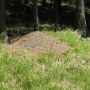 Na Pohorju so številna zelo velika mravljišča.