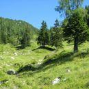 Pašniki nad planino Loka.
