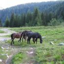 Konji se pasejo na Grohatu.