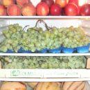 polno založen hladilnik