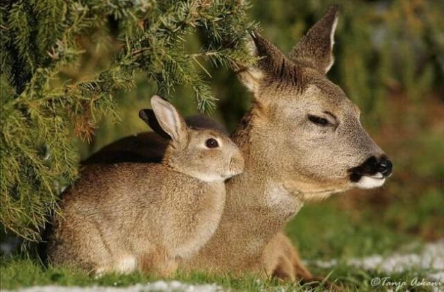 001. srnjak in zajec