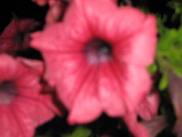 Domače rožce