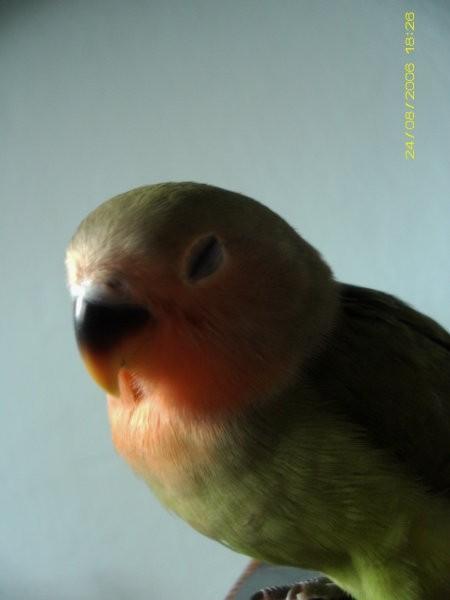 Naše živali - foto