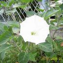 Letošnji prvi cvet