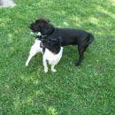 BIBI je bil GAL zelo všeč....prava pasja ljubezen...non stop se mu je ponujala... :)