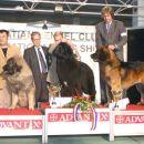 CACIB ZAGREB 27.11.2005. GLEN VUJANSKI