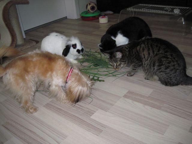 Ostale živali - foto