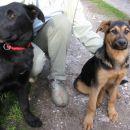 Črn samček in črno-rjava samička, stara 4 mesece! 070 813 406 ali 031 701 973 ODDANA!!!