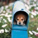 pes v nabiralniku