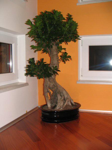 Bonsai - foto povečava